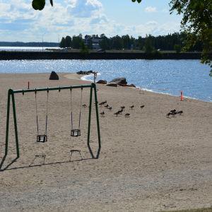 Endast gässen rör sig på Sandö badstrand i Vasa när det råder badförbud.