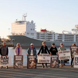 Personer som protesterar mot boskapsexport med fraktfartyg i en hamn i Australien.