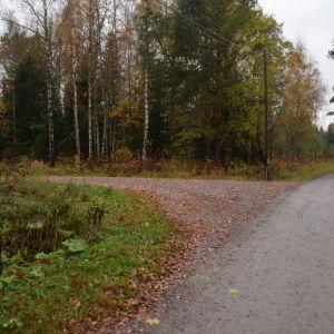 En tomt med en massa träd i Västankvarn i Ingåd är det ska byggas ett slakteri.