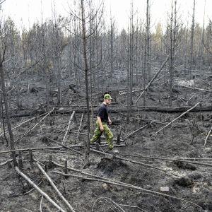 Bilder som visar den gigantiska skogsbrandens forodelse