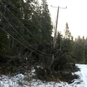 Träd som fallit över en elledning nära Vasa den 2.1.2019.