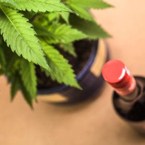 En cannabisplanta och en flaska fin fotade uppifrån.