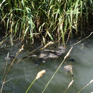 I Metviken syns fortfarande spår av läckaget där avloppsvatten rann ut.