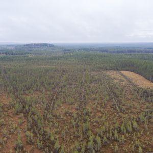 Ojitettu suo Kajaanissa, kuvattuna ilmasta.