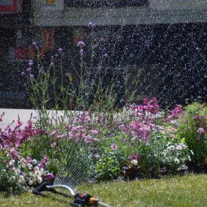 En bild på en vattenspridare som vattnar blommor. Den har flera strålar och bevattnar en rabatt med blommor i olika höjd.