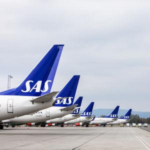 Sex SAS-flyg står stilla på marken.