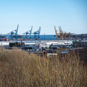 Högt gulbrunt gräs i förgrunden, blå himmel i bakgrunden stora lyftkranar i en hamn i mitten. Nordsjö hamn i Helsingfors i mars 2020