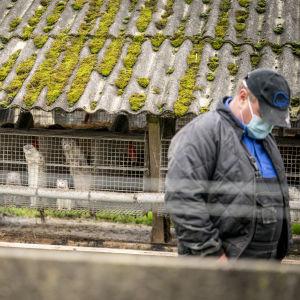 Minkfarmare Thorbjoern Jepsen står med munskydd och huvudet böjt framför burar där minkar tittar ut i Gjoel, Danmark.