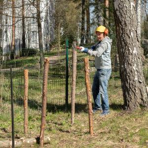 Pirkka-Pekka Petelius hakkaa aidantolppia maahan