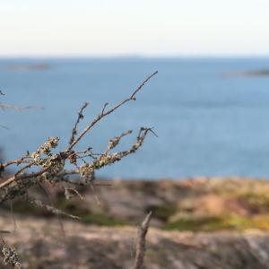 En torr kvist i förgrunden, blått hav och skärgård i bakgrunden.