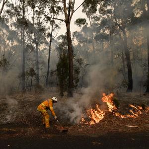 En brandman släcker markbrand vid en motorväg nära Ulladulla i Australien 5 januari 2020.