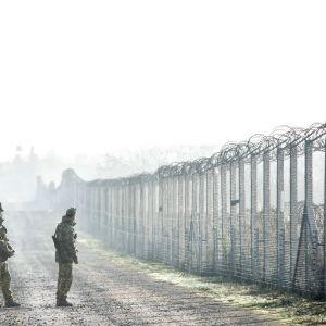 Unkarin sotilaat partioivat Unkarin ja Serbian rajavyöhykkeellä.