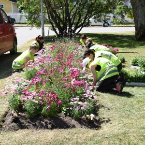 En bild på parkarbetare i reflexvästar som planterar blommor i en park. blommorna finns i en rabatt och blommorna är rosa och av olika höjd. Bredvid parken finns en gata och där står en röd paketbil.