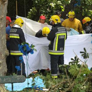 Räddningsarbetare på Madeira undersöker platsen där trädet som lär ha dödat 11 personer fallit.