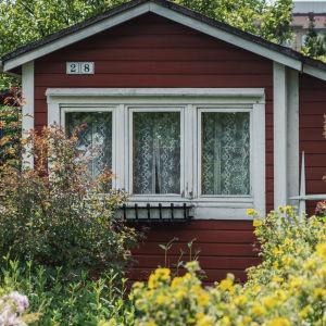 Röd stuga med vita knutar i lummig trädgård. I bakgrunden moderna höghus.