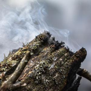 Brinnande trädstam