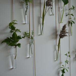 små växter i provrör som en inredning på väggen