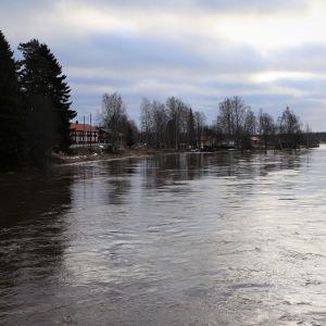 Helmikuista Kyrönjokea Perttilänsillalta katsottuna. Sula vesi