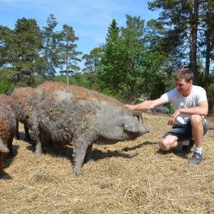 Kasper Lindroos och några svin.