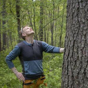 Heikki Hamunen katsoo ylös paksua mäntyä Kotisalon suojellussa mäntymetsässä.