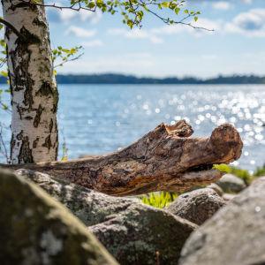 Merimaisemaa Haukilahden rannasta.