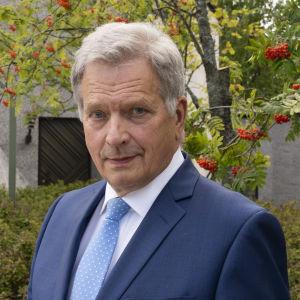 Suomen tasavallan presidentti Sauli Niinistö Mäntyniemessa pihlajapuun edessä