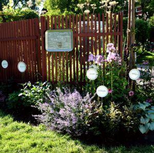 Kukkapenkki ja puutarhakilvet