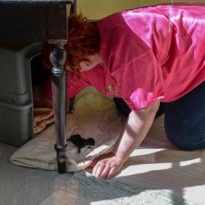 Kattunge ligger på golvet framför sin bur.