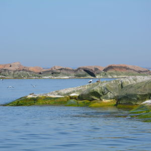 Ejdrar sitter på en klippa ute på havet.