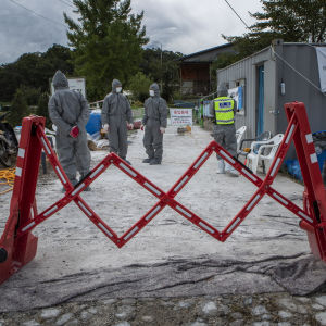En avspärrning av en väg. I bakgrunden ses personer klädda i skyddsoveraller och munskydd. Personerna gör städarbete för att hindra afrikansk svinpest