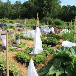 Ett trädgårdsland.