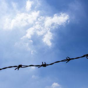 Taggtråd med blå himmel i bakgrunden