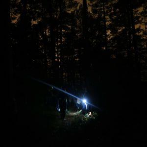 En svart skog med trädsilhuetter mot himlen. I skogen ser man ficklampor och vaga människofigurer.