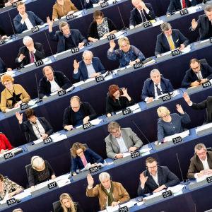 Europaparlamentariker i parlamentet i Strasbourg den 13 februari 2019.