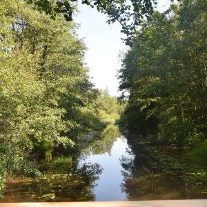 En å med stark vegetation.