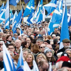 Ihmisjoukko Skotlannin sinivalkoisten lippujen kera.
