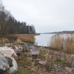 En strand med stenar och vass där en småbåtshamn ska byggas i Gammelboda.