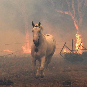 En vit häst galopperar med rök och brinnande träd i bakgrunden.