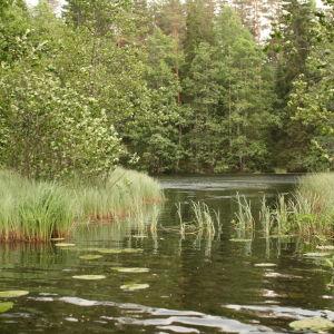 Kesäinen, vehreä jokimaisema