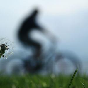 Person cyklar, i förgrunden syns en maskros.