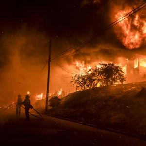 Skogsbranden Thomas i Kalifornien i december 2017.