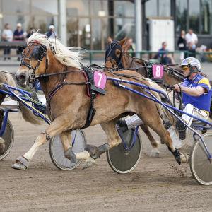 Hevonen juoksee raviradalla muiden hevosten rinnalla.