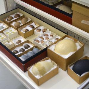 En låda med fågelägg på Naturhistoriska museet i Helsingfors. Innehåller ägg från bland annat struts, emu och kejsarpingvin.