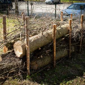 Lahopuuaidan tolppien väliin on kasattu oksia ja puita