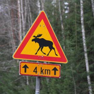 varning för älg trafikmärke.