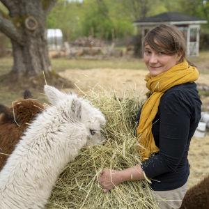 Annina Vartio omgiven av sina alpackor.