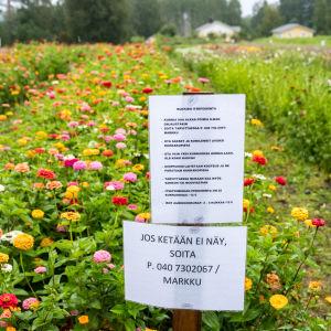 Kukkapelto, jonka edessä ohjekyltti siitä, miten kukkia poimitaan.