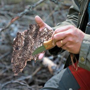 Spår av granbarkborre i barkbit