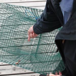 Mies esittelee Saimaa-katiskan turvalankaa, joka rajoittaa norpan pääsyä katiskaan.