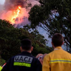 Brandmän som ser på skogselden på Gran Canaria.